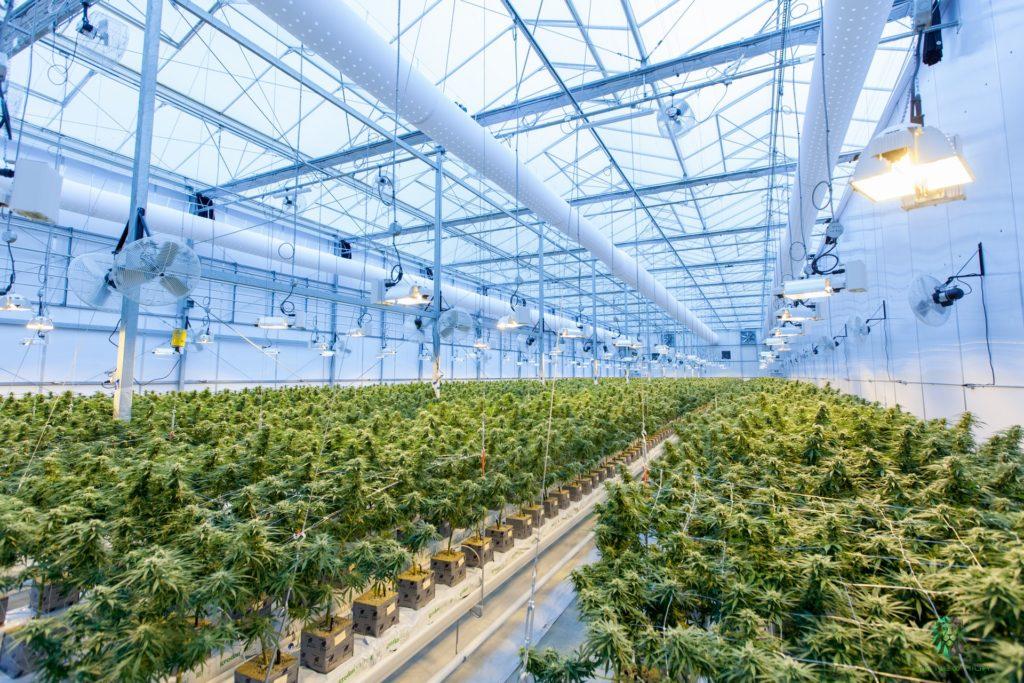 indoor grow room facility
